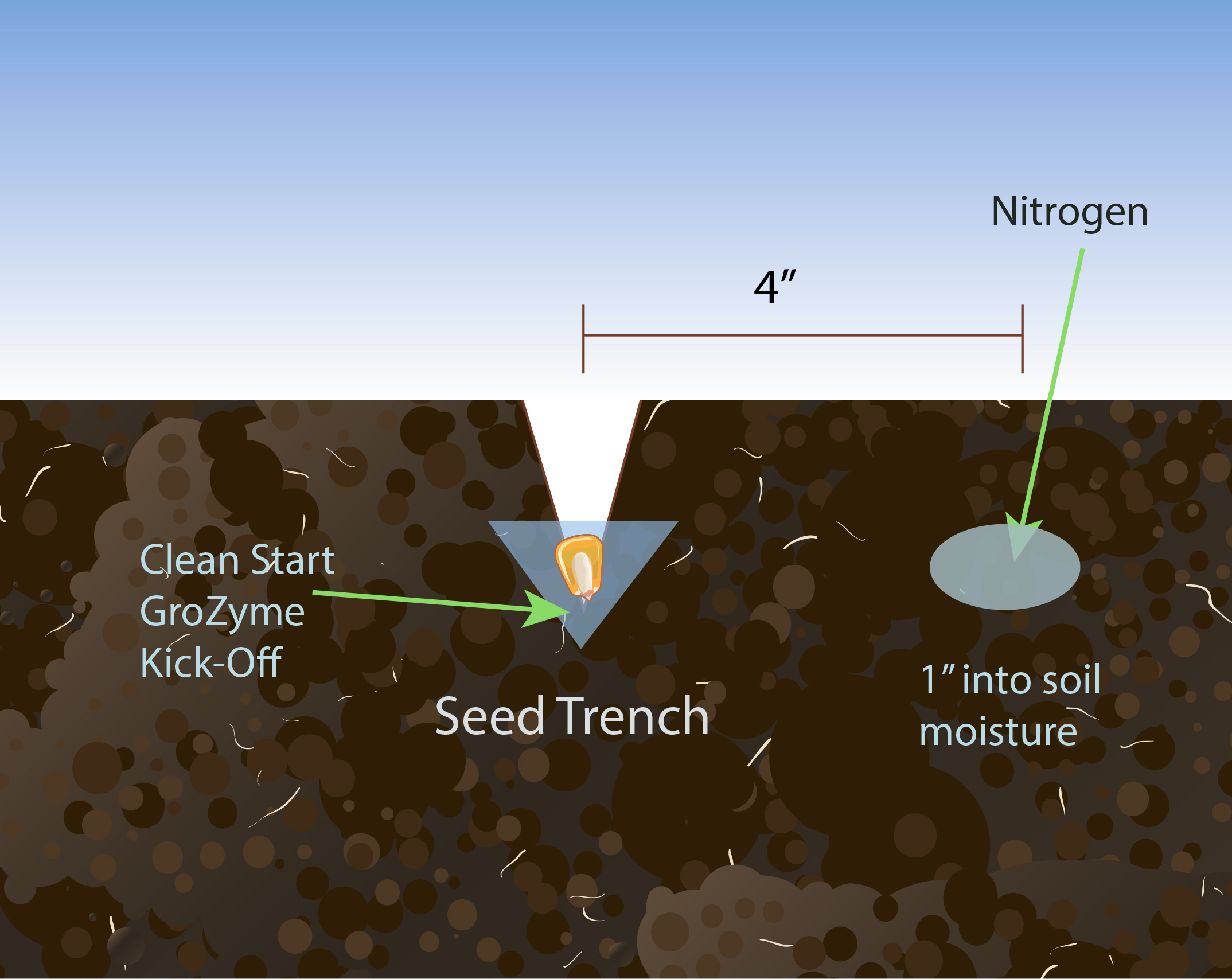 Diagram of a Seed Trench