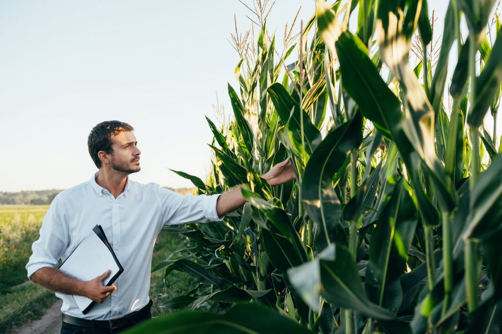 agronomist-examining-crops
